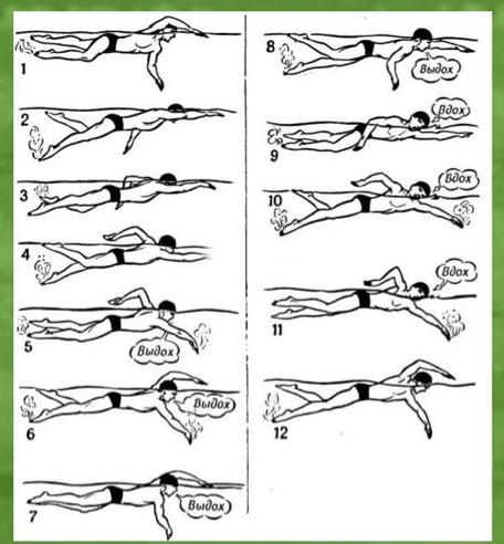 Упражнения в бассейне при сколиозе