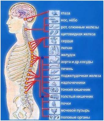 Как определить что болит сердце или грудной остеохондроз