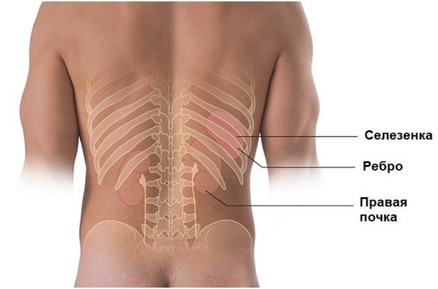 конь противогазеееееееееееее боль под ребрами сзади со спины кажется